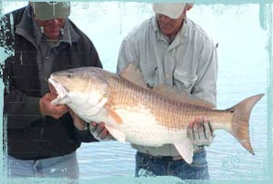 Fly fishing for redfish with Gary Taylor