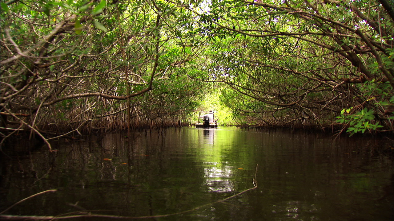 florida everglades essay View and download florida essays examples also discover topics, titles, outlines, thesis statements  2011, from the florida everglades website:.