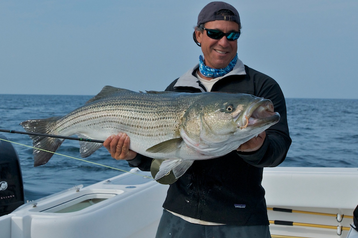41 pound striped bass caught using the new g loomis nrx for Fishing rod in spanish