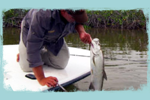 changing the fishing lure yields a tarpon catch